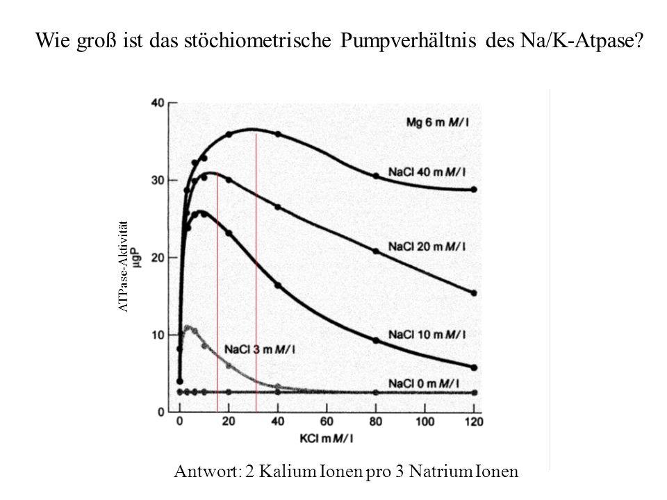 H.Gaub / SS 2007BPZ§4.223 Wie groß ist das stöchiometrische Pumpverhältnis des Na/K-Atpase? Antwort: 2 Kalium Ionen pro 3 Natrium Ionen ATPase-Aktivit