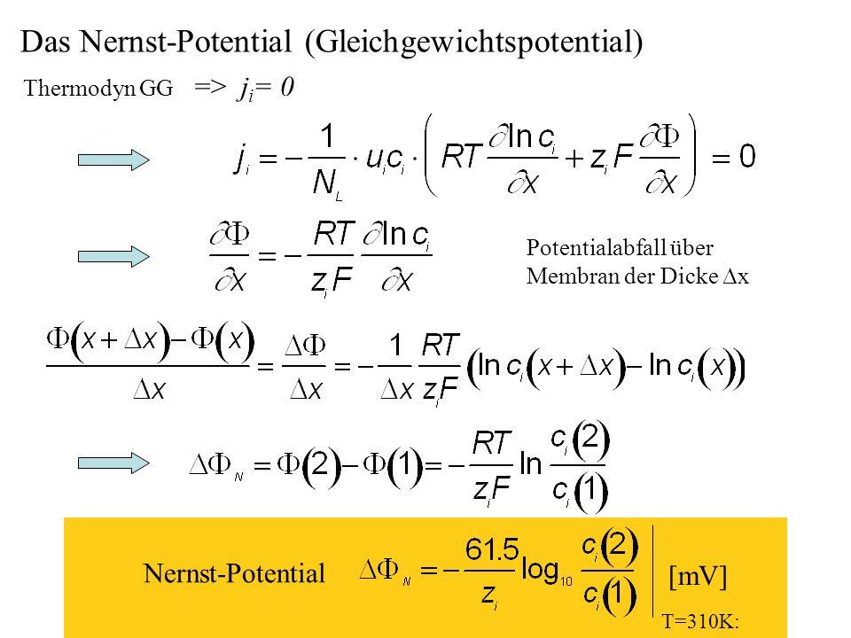 H.Gaub / SS 2007BPZ§4.27 Das Nernst-Potential (Gleichgewichtspotential) Thermodyn GG => j i = 0 Potentialabfall über Membran der Dicke x T=310K: Nerns