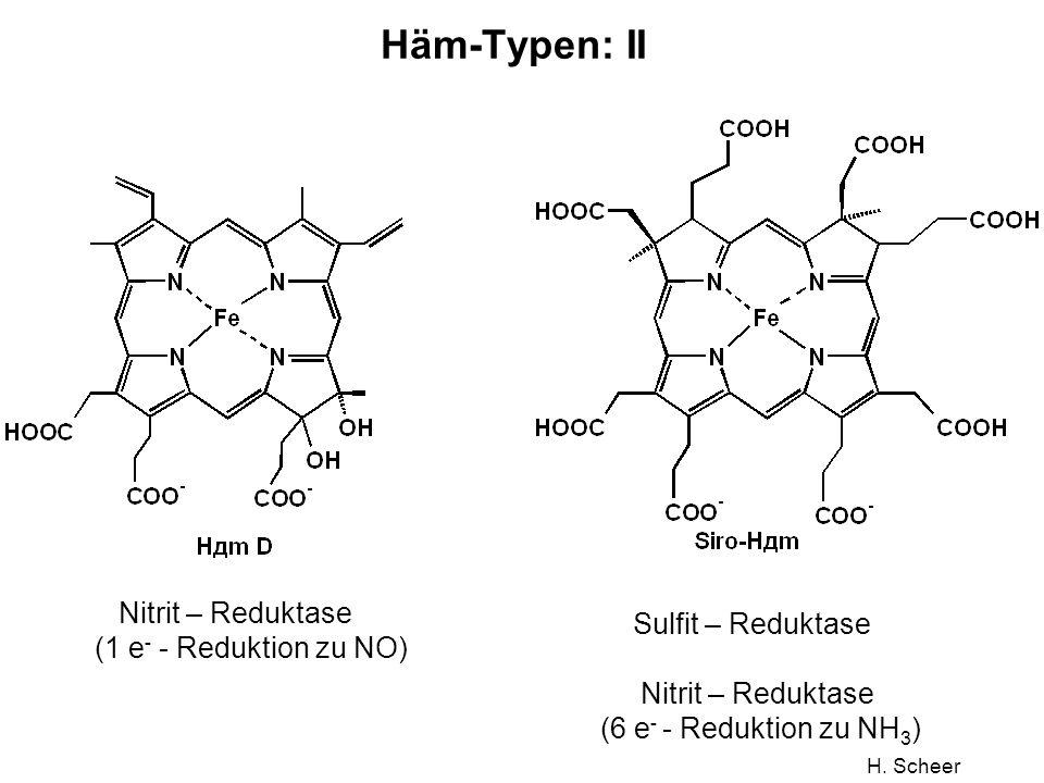 H. Scheer Häm-Typen: II Sulfit – Reduktase Nitrit – Reduktase (6 e - - Reduktion zu NH 3 ) Nitrit – Reduktase (1 e - - Reduktion zu NO)