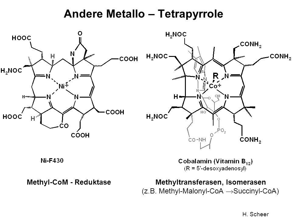 H. Scheer Andere Metallo – Tetrapyrrole Methyl-CoM - Reduktase Methyltransferasen, Isomerasen (z.B. Methyl-Malonyl-CoA Succinyl-CoA)