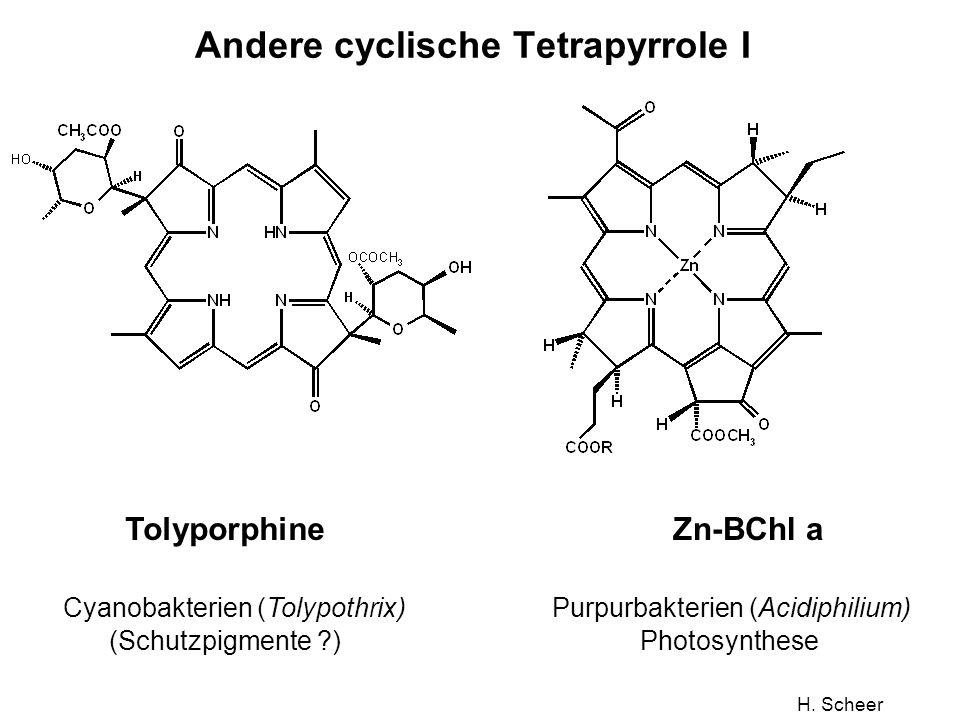 H. Scheer Andere cyclische Tetrapyrrole I Tolyporphine Cyanobakterien (Tolypothrix) (Schutzpigmente ?) Zn-BChl a Purpurbakterien (Acidiphilium) Photos