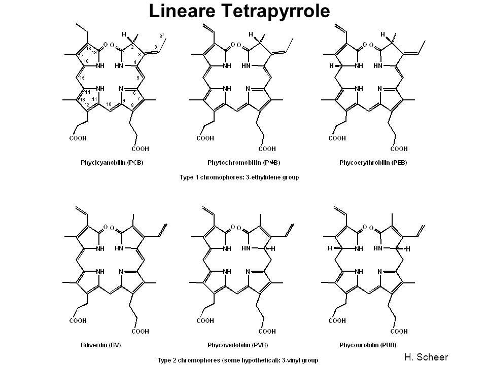 H. Scheer Lineare Tetrapyrrole