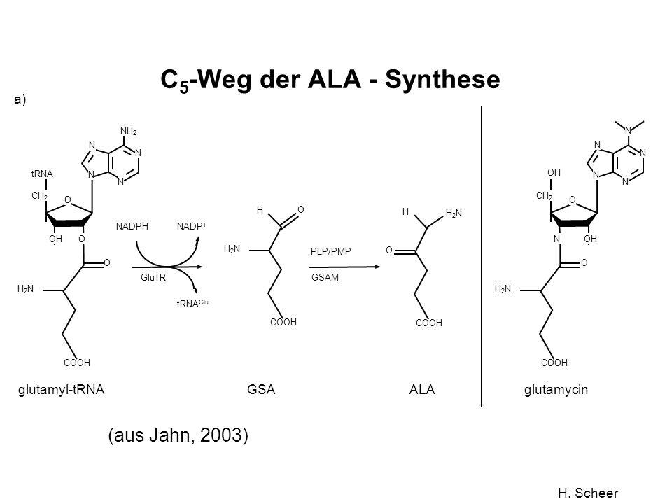 H. Scheer Figure 1 a)b) glutamyl-tRNA NADPH NADP + COOH H2NH2N O O N N N N NH 2 O OH CH 2 tRNA tRNA Glu GluTR GSA COOH H2NH2N O H ALA COOH H2NH2N H O
