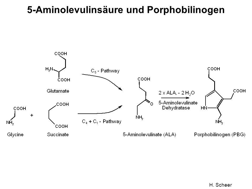 H. Scheer 5-Aminolevulinsäure und Porphobilinogen