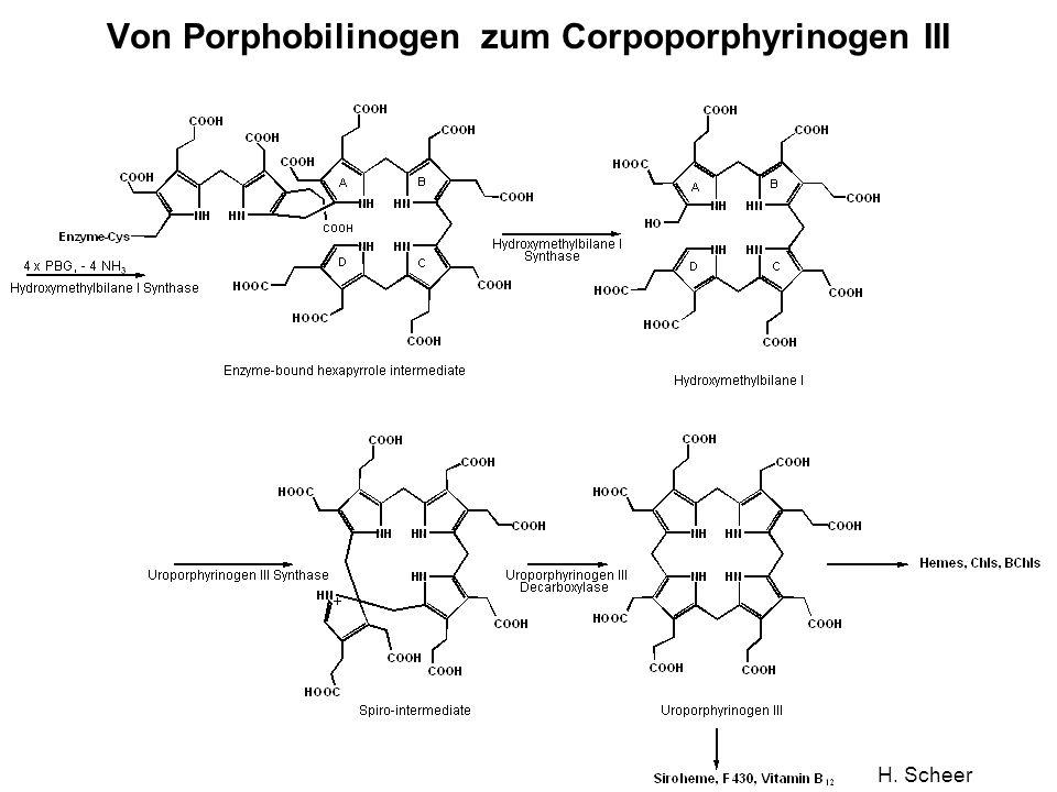 H. Scheer Von Porphobilinogen zum Corpoporphyrinogen III