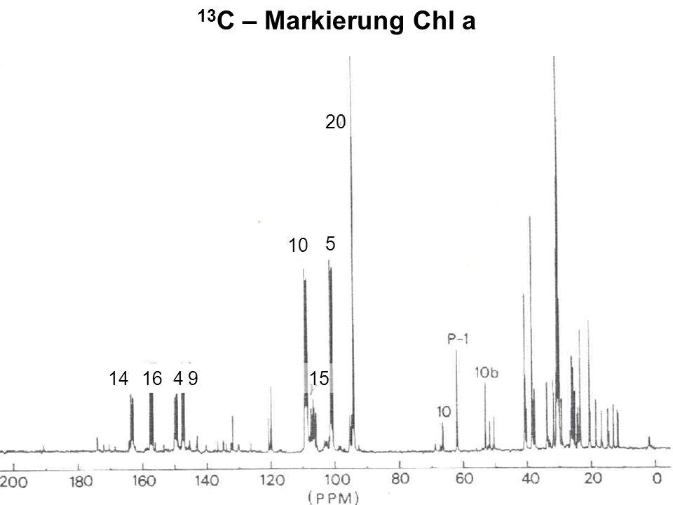 H. Scheer 13 C – Markierung Chl a 5 15 10 20 1416 4 9