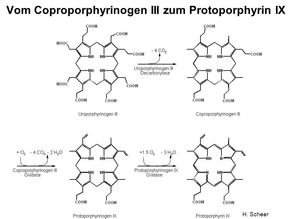 H. Scheer Vom Coproporphyrinogen III zum Protoporphyrin IX