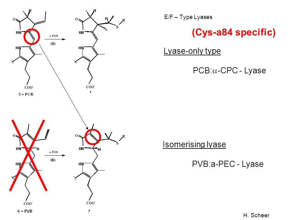 H. Scheer E/F – Type Lyases Lyase-only type PCB: -CPC - Lyase (Cys-a84 specific) Isomerising lyase PVB:a-PEC - Lyase