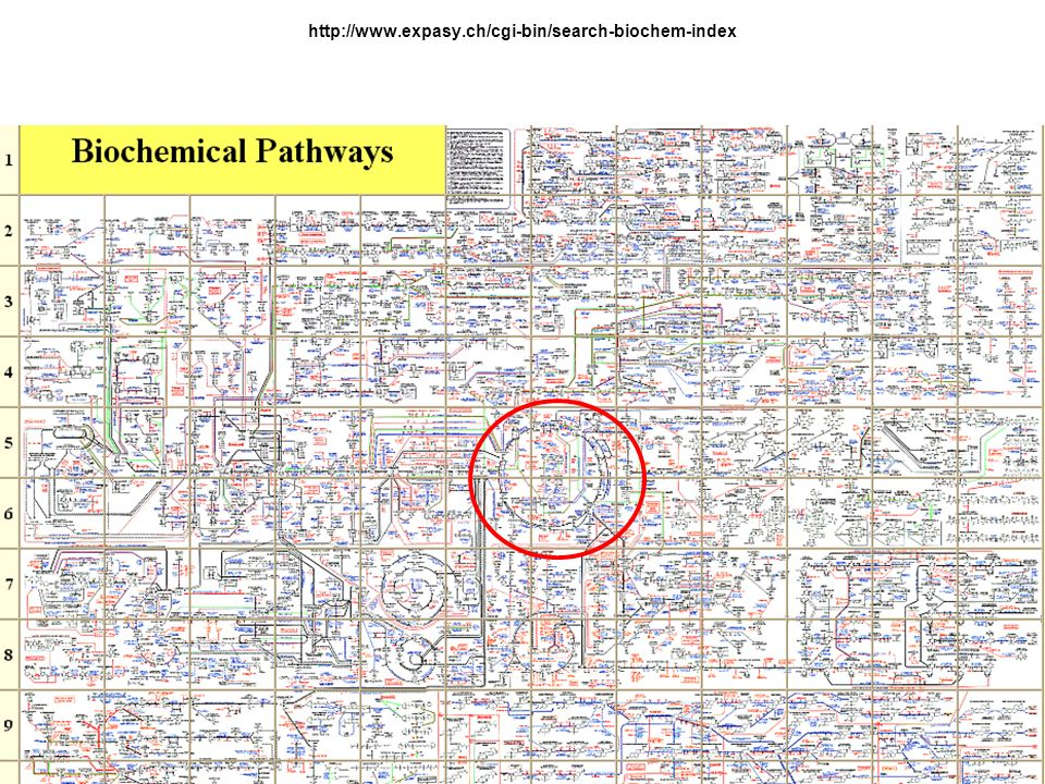 H.Scheer Andere Metallo – Tetrapyrrole Methyl-CoM - Reduktase Methyltransferasen, Isomerasen (z.B.