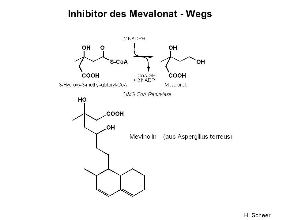 H. Scheer Inhibitor des Mevalonat - Wegs