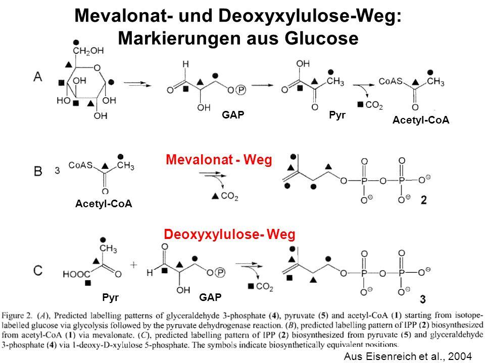 H. Scheer Mevalonat- und Deoxyxylulose-Weg: Markierungen aus Glucose Aus Eisenreich et al., 2004 GAP Pyr Acetyl-CoA Mevalonat - Weg Deoxyxylulose- Weg