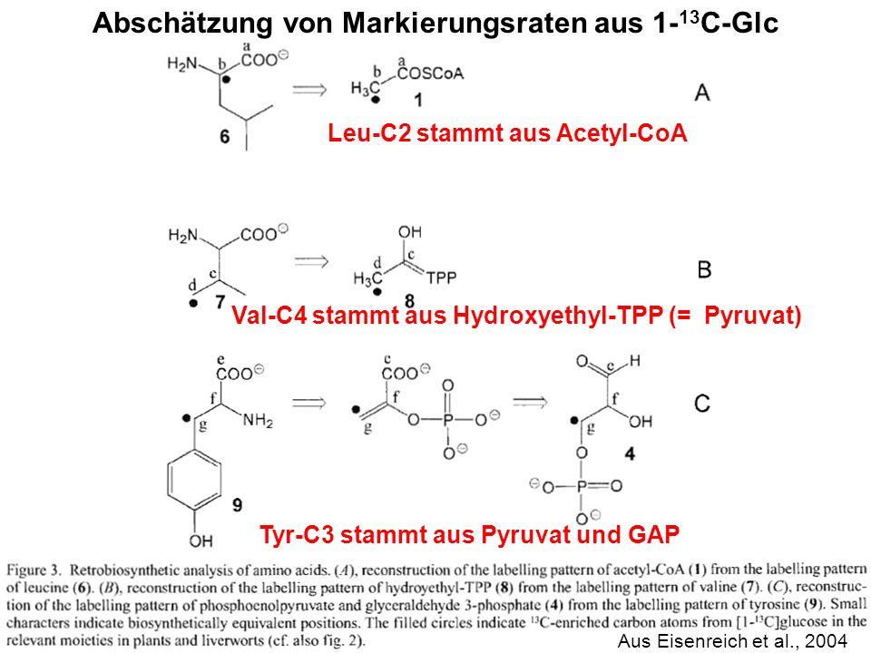 H. Scheer Abschätzung von Markierungsraten aus 1- 13 C-Glc Aus Eisenreich et al., 2004 Leu-C2 stammt aus Acetyl-CoA Tyr-C3 stammt aus Pyruvat und GAP