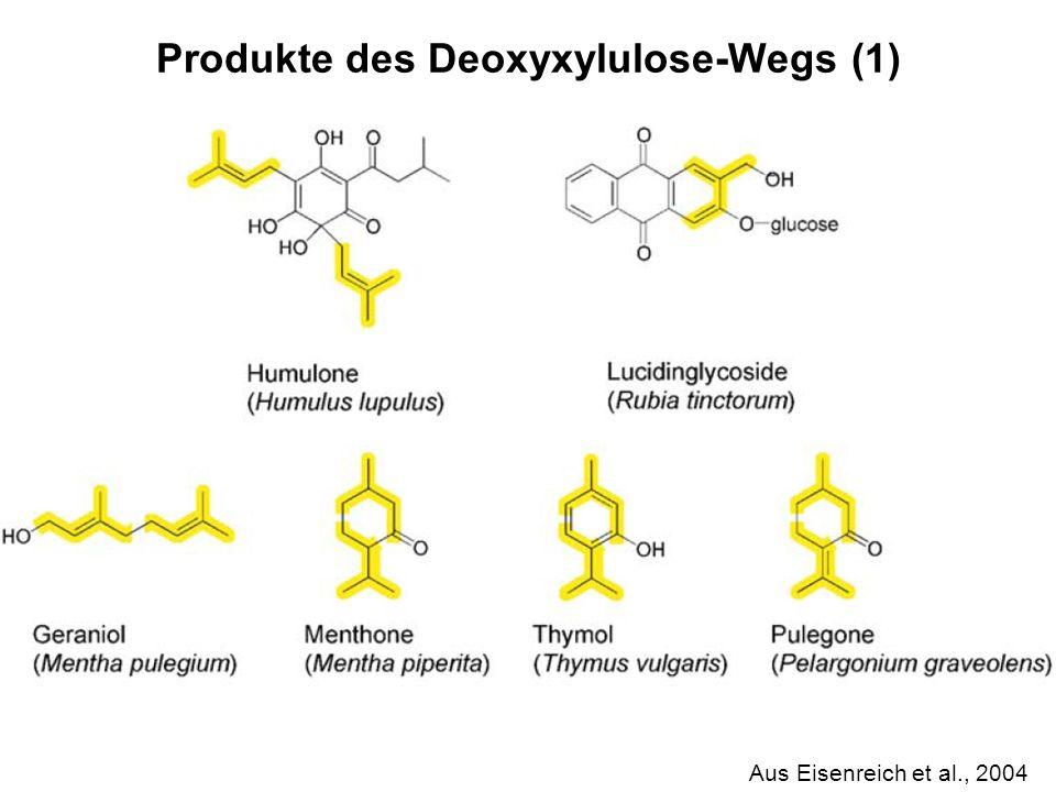 H. Scheer Aus Eisenreich et al., 2004 Produkte des Deoxyxylulose-Wegs (1)