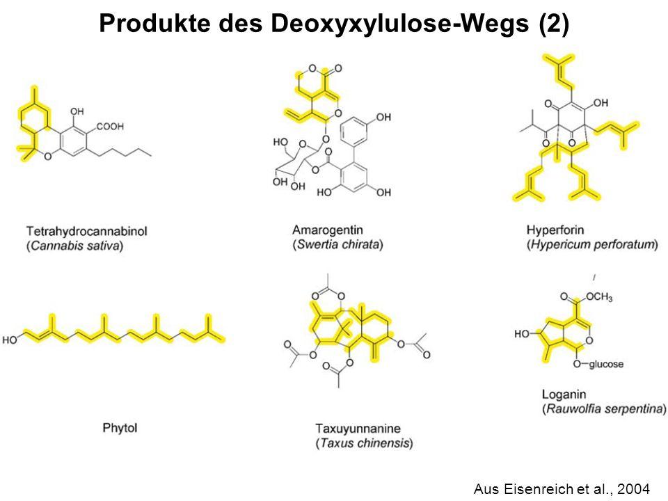 H. Scheer Aus Eisenreich et al., 2004 Produkte des Deoxyxylulose-Wegs (2)