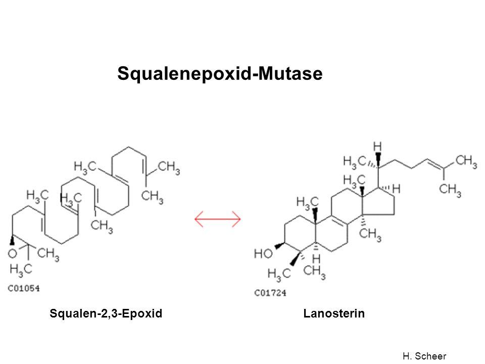 H. Scheer Squalenepoxid-Mutase Squalen-2,3-EpoxidLanosterin