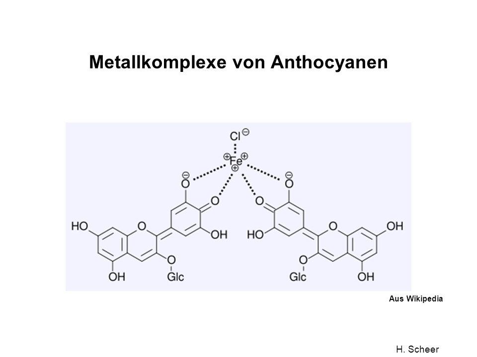 H. Scheer Metallkomplexe von Anthocyanen Aus Wikipedia
