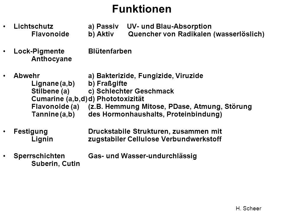 H. Scheer Funktionen Lichtschutz a) Passiv UV- und Blau-Absorption Flavonoide b) Aktiv Quencher von Radikalen (wasserlöslich) Lock-PigmenteBlütenfarbe