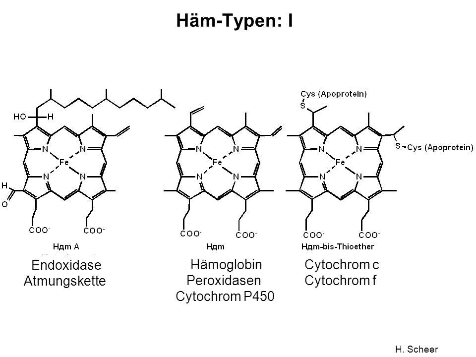 H. Scheer Häm-Typen: I Endoxidase Atmungskette Hämoglobin Peroxidasen Cytochrom P450 Cytochrom c Cytochrom f