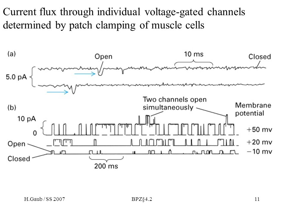 H.Gaub / SS 2007BPZ§4.211 Current flux through individual voltage-gated channels determined by patch clamping of muscle cells