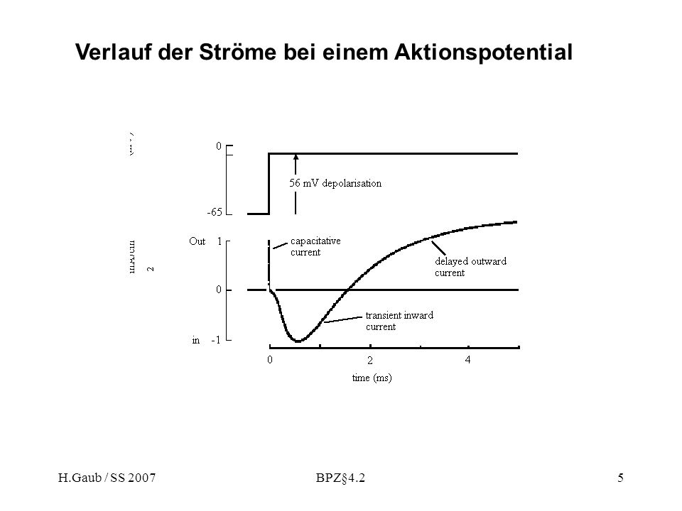 H.Gaub / SS 2007BPZ§4.25 Verlauf der Ströme bei einem Aktionspotential