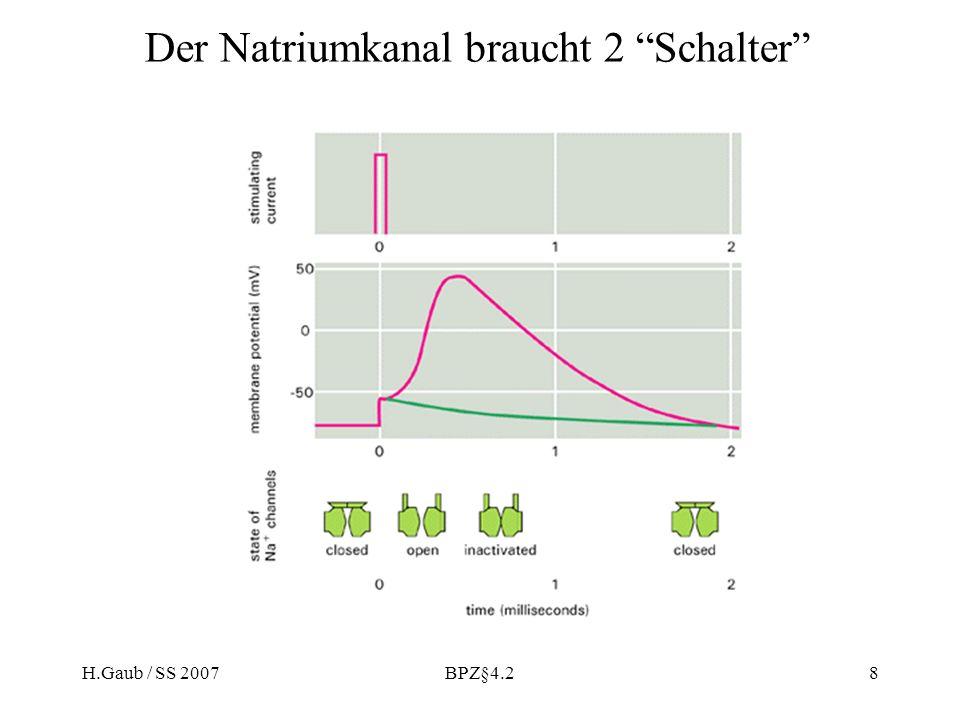 H.Gaub / SS 2007BPZ§4.28 Der Natriumkanal braucht 2 Schalter