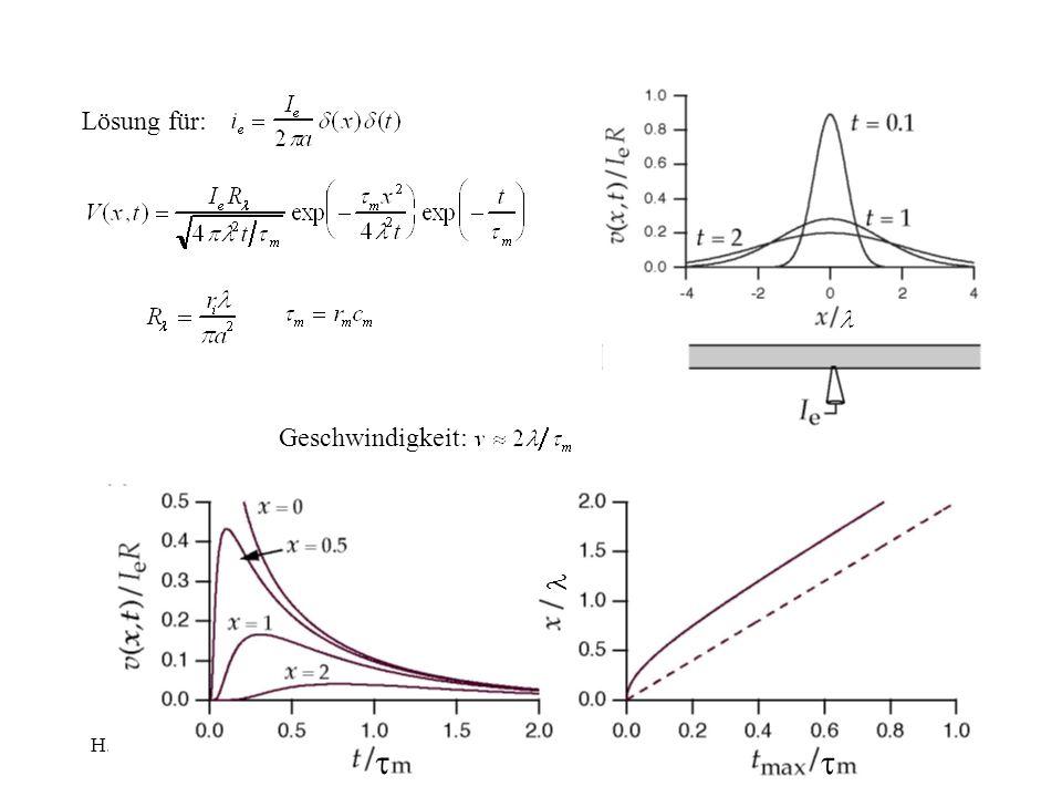 H.Gaub / SS 2007BPZ§4.25 Lösung für: Geschwindigkeit: