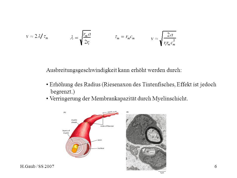 H.Gaub / SS 2007BPZ§4.26 Ausbreitungsgeschwindigkeit kann erhöht werden durch: Erhöhung des Radius (Riesenaxon des Tintenfisches, Effekt ist jedoch begrenzt.) Verringerung der Membrankapazität durch Myelinschicht.
