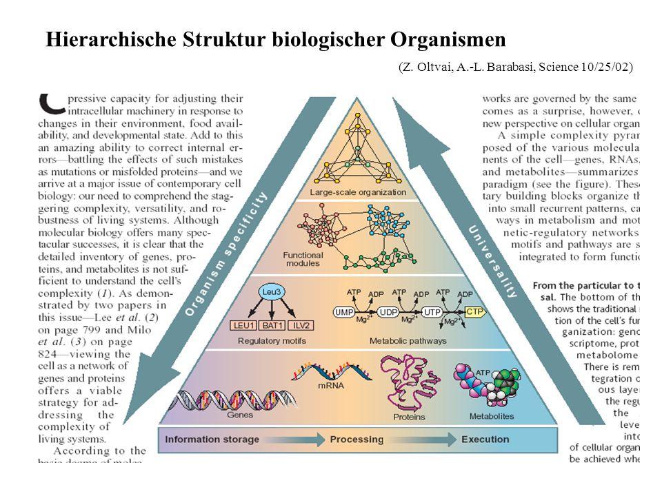 Hierarchische Struktur biologischer Organismen (Z. Oltvai, A.-L. Barabasi, Science 10/25/02)
