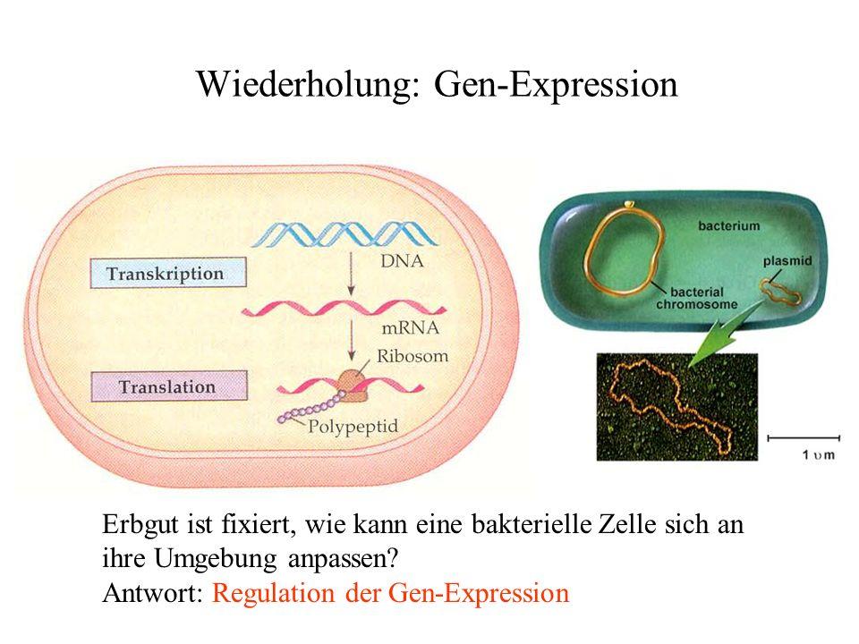 Wiederholung: Gen-Expression Erbgut ist fixiert, wie kann eine bakterielle Zelle sich an ihre Umgebung anpassen? Antwort: Regulation der Gen-Expressio