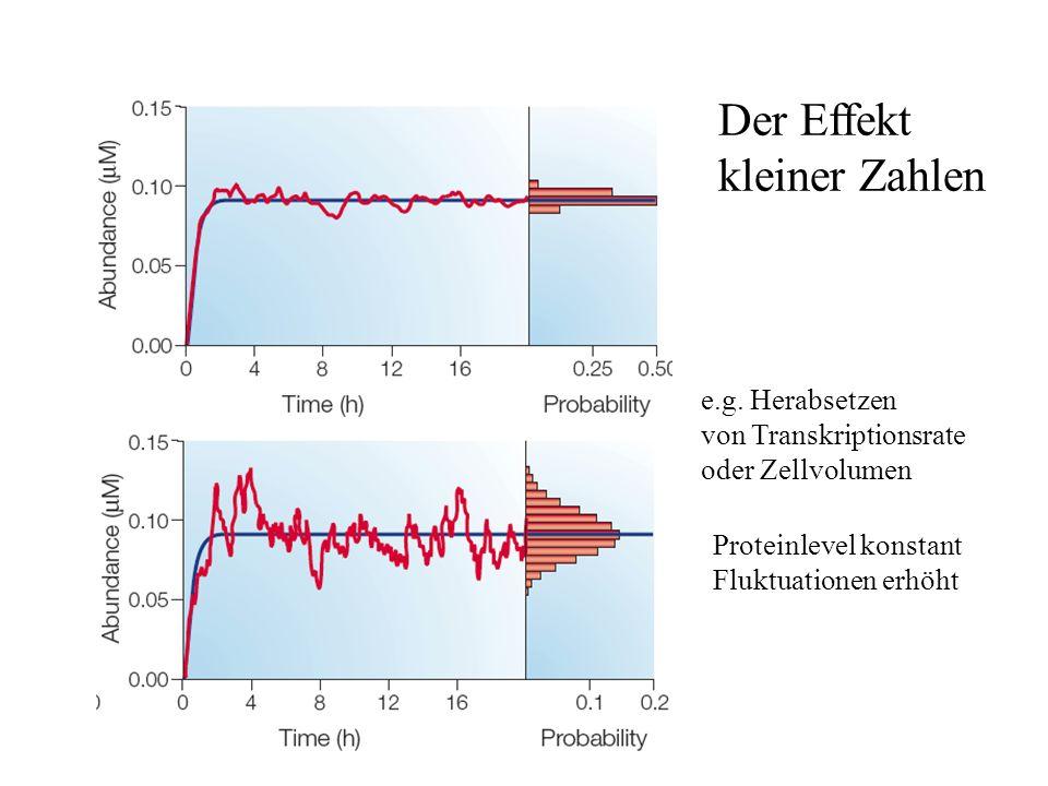 Der Effekt kleiner Zahlen e.g. Herabsetzen von Transkriptionsrate oder Zellvolumen Proteinlevel konstant Fluktuationen erhöht