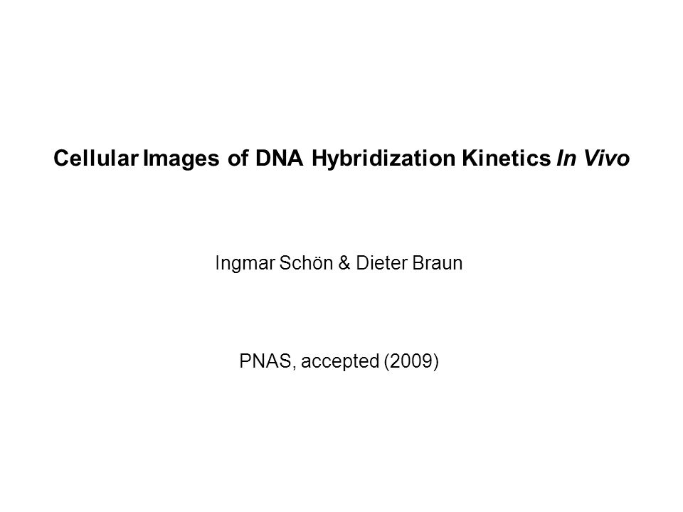 PNAS, accepted (2009) Ingmar Schön & Dieter Braun Cellular Images of DNA Hybridization Kinetics In Vivo