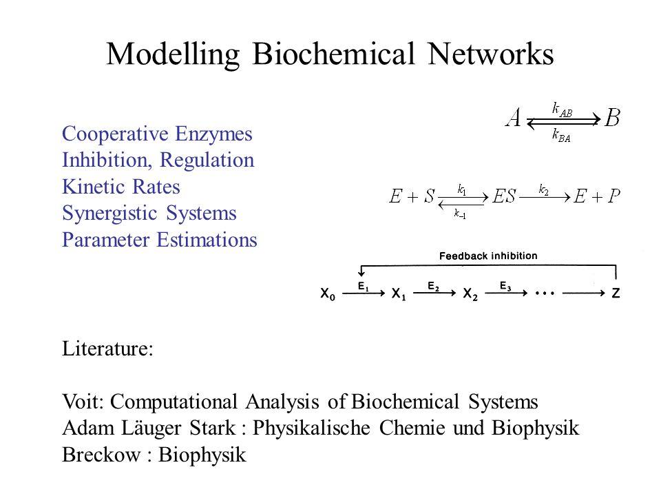 Die Stoichiometrische Matrix: Flussanalyse