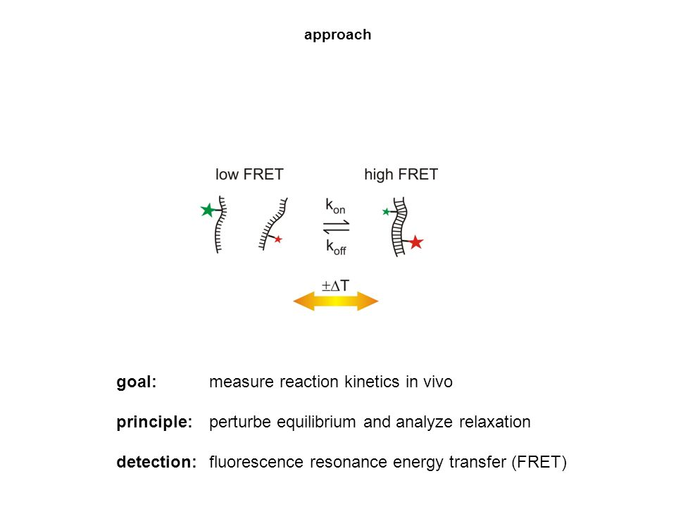 approach goal: measure reaction kinetics in vivo principle: perturbe equilibrium and analyze relaxation detection: fluorescence resonance energy trans