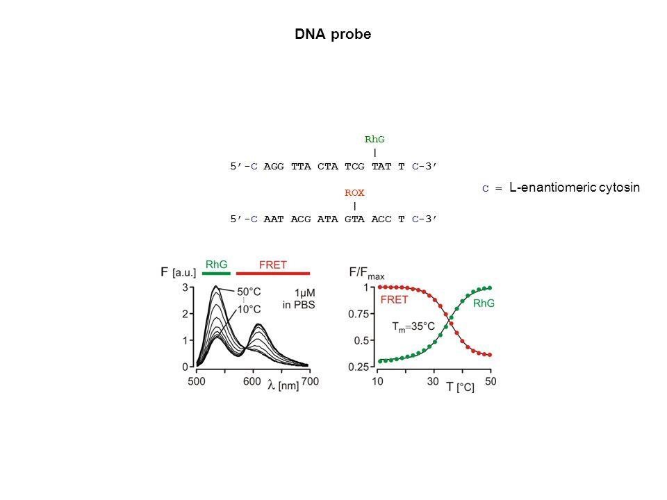 DNA probe RhG | 5-C AGG TTA CTA TCG TAT T C-3 ROX | 5-C AAT ACG ATA GTA ACC T C-3 C = L-enantiomeric cytosin