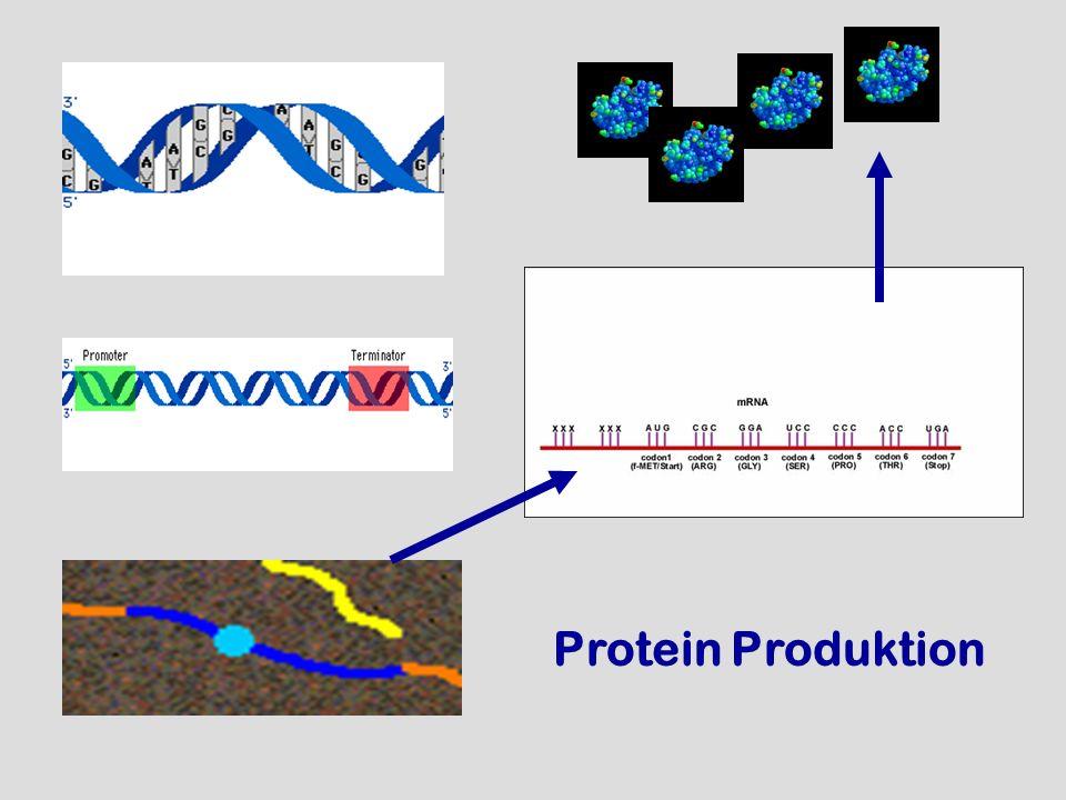 Protein Produktion