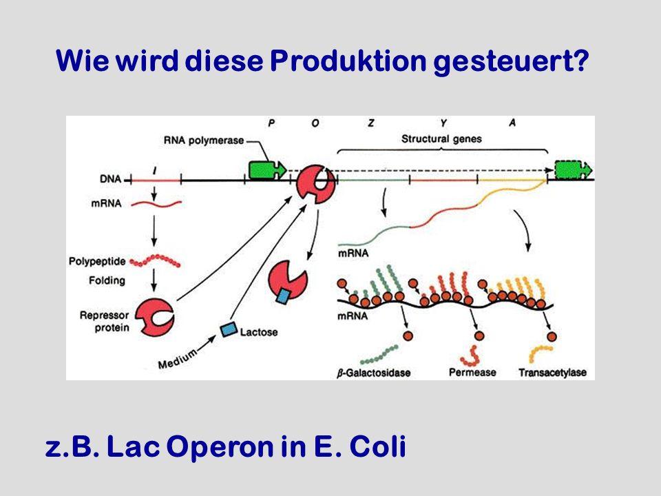 Wie wird diese Produktion gesteuert? z.B. Lac Operon in E. Coli