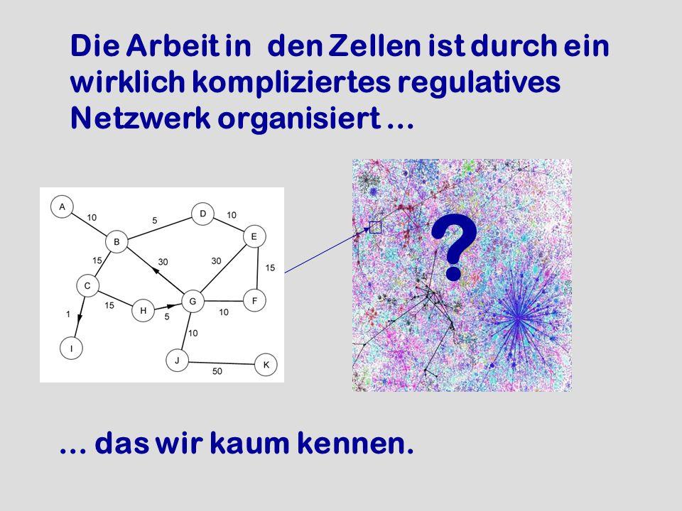 Die Arbeit in den Zellen ist durch ein wirklich kompliziertes regulatives Netzwerk organisiert...... das wir kaum kennen. ?