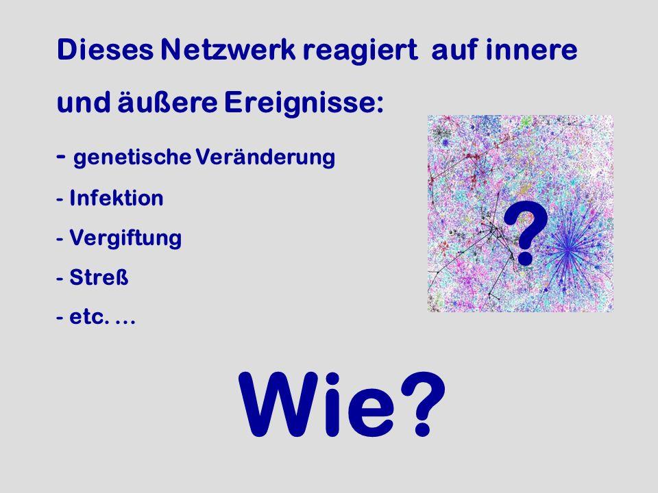 Dieses Netzwerk reagiert auf innere und äußere Ereignisse: - genetische Veränderung - Infektion - Vergiftung - Streß - etc.... ? Wie?
