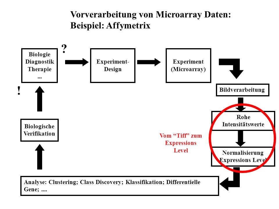 Experiment- Design Experiment (Microarray) Biologische Verifikation Bildverarbeitung Rohe Intensitätswerte Normalisierung Expressions Level Analyse: Clustering; Class Discovery; Klassifikation; Differentielle Gene;....