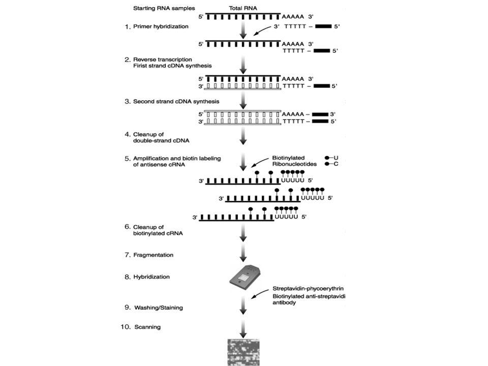 Vergleich von mehreren Proben G C A C G C A C Patient Kontrolle G C A C G C A C Patient Kontrolle