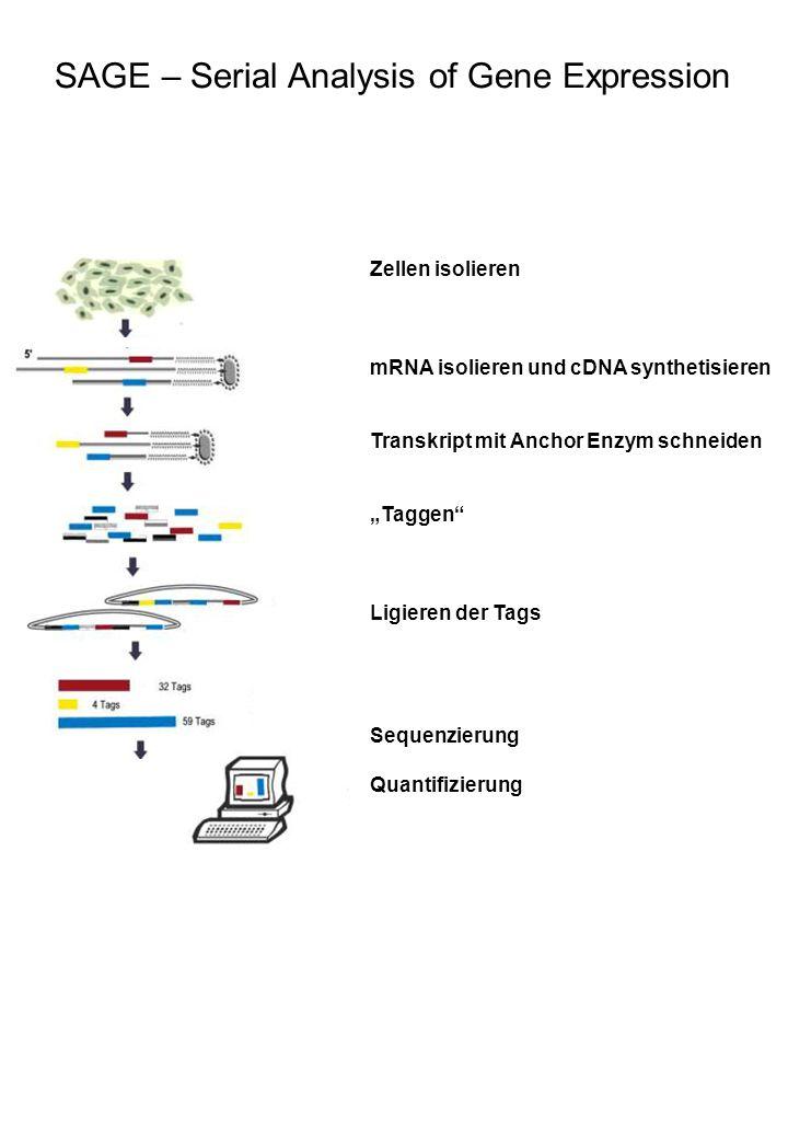 Zellen isolieren mRNA isolieren und cDNA synthetisieren Transkript mit Anchor Enzym schneiden Taggen Ligieren der Tags Sequenzierung Quantifizierung S