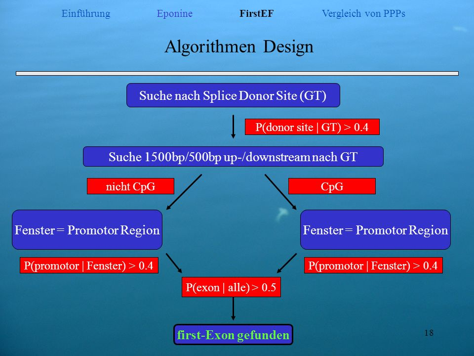 18 Algorithmen Design Suche nach Splice Donor Site (GT) Suche 1500bp/500bp up-/downstream nach GT Fenster = Promotor Region first-Exon gefunden P(dono
