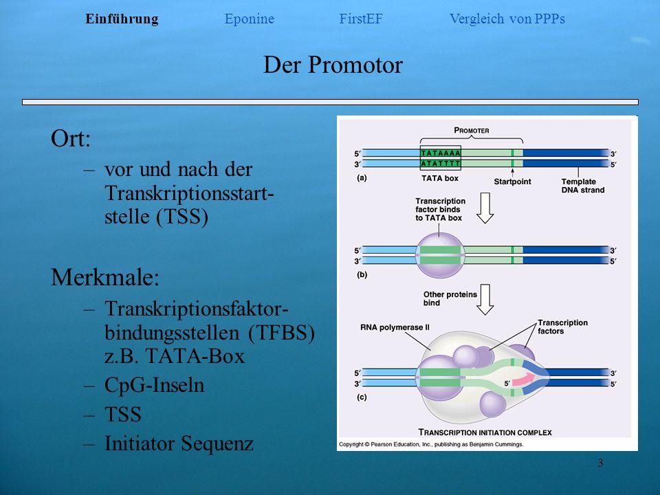 24 Funktion X X only CpG Insel X HMM X X X TATA -Box QDA First EF XPromoter 2.0 INR + Abstand XNNPP pysikalische Eigenschaften XMC Promoter RVM Eponine XXDragon GSF/PF stat.