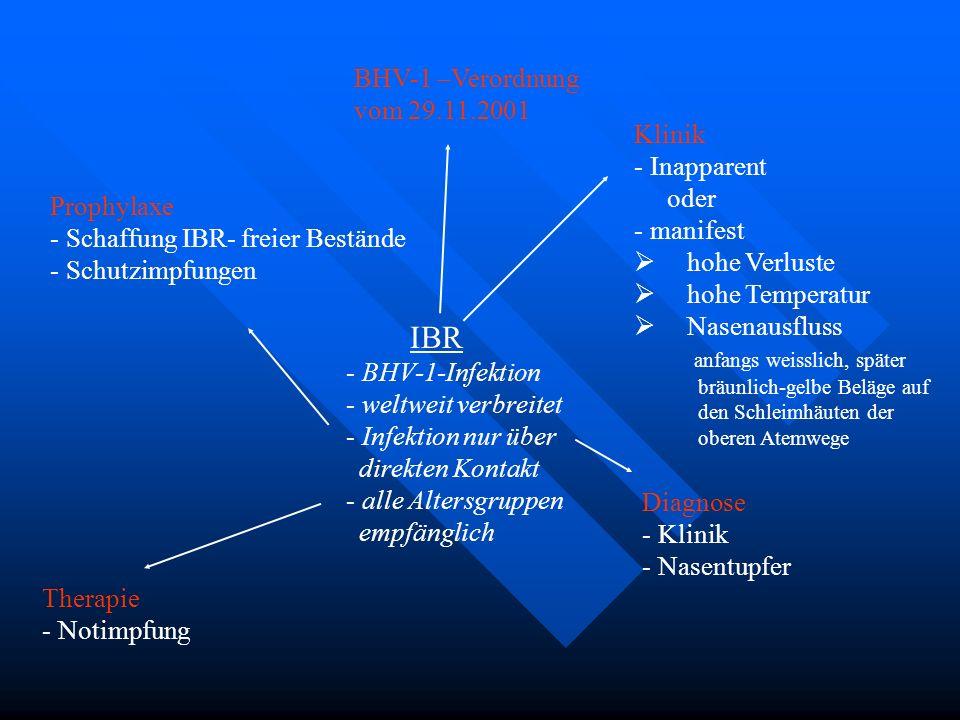 IBR - BHV-1-Infektion - weltweit verbreitet - Infektion nur über direkten Kontakt - alle Altersgruppen empfänglich BHV-1 –Verordnung vom 29.11.2001 Kl