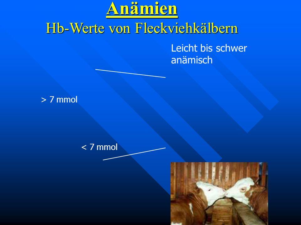 Anämien Hb-Werte von Fleckviehkälbern Leicht bis schwer anämisch > 7 mmol < 7 mmol