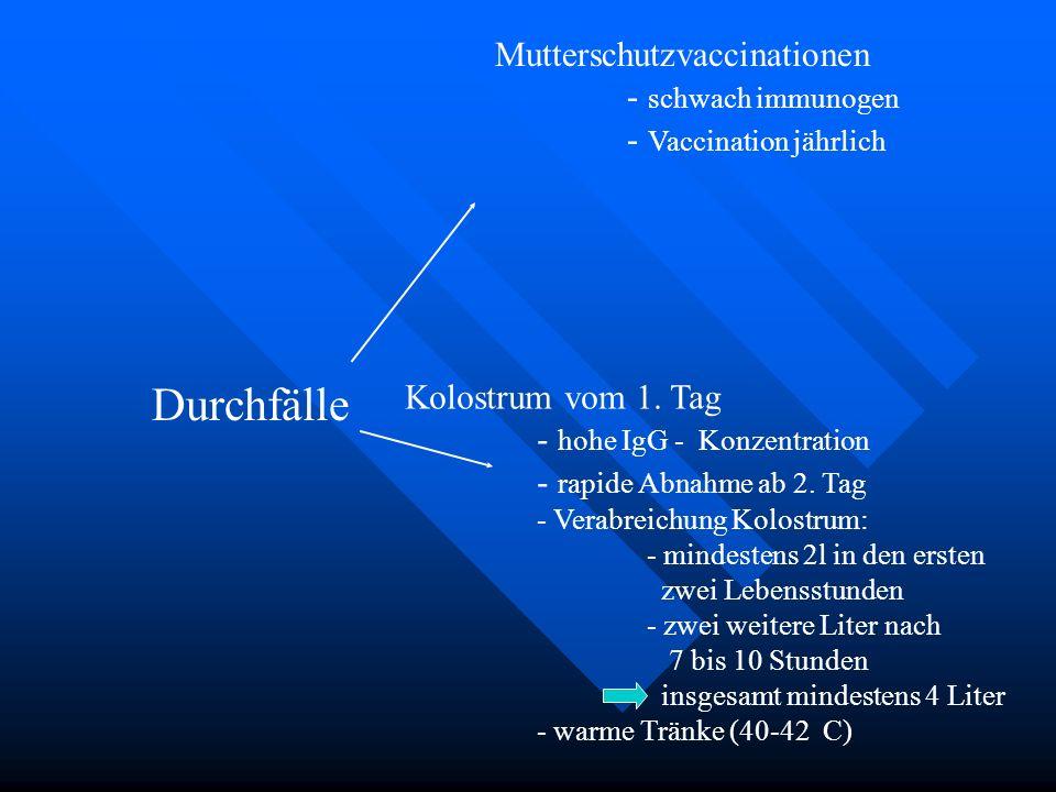 Durchfälle Mutterschutzvaccinationen - schwach immunogen - Vaccination jährlich Kolostrum vom 1. Tag - hohe IgG - Konzentration - rapide Abnahme ab 2.