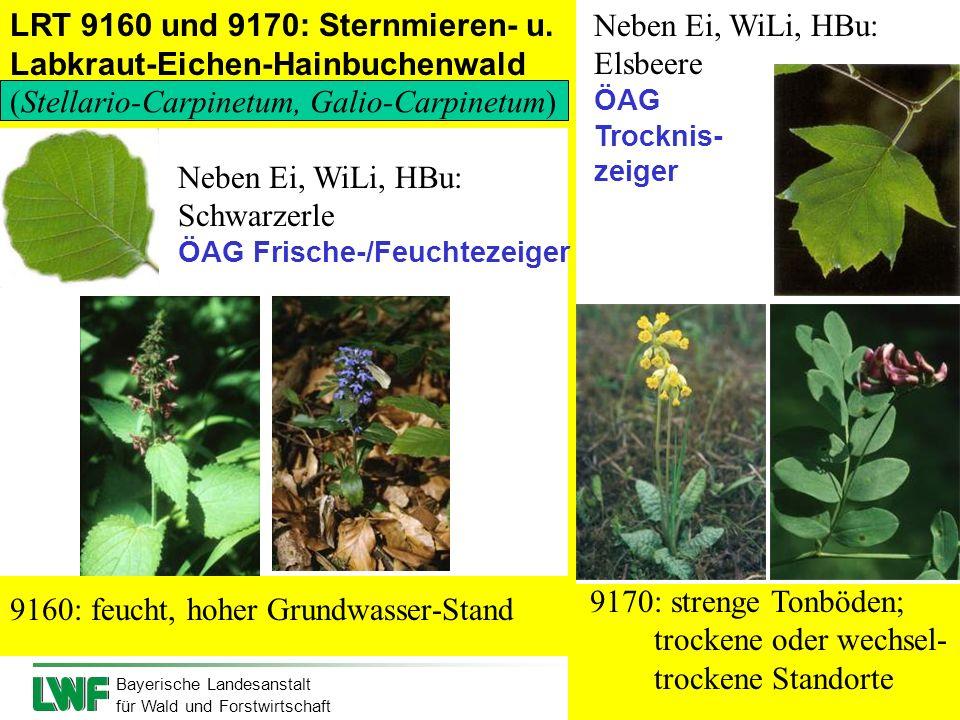 Bayerische Landesanstalt für Wald und Forstwirtschaft LRT 9160 und 9170: Sternmieren- u. Labkraut-Eichen-Hainbuchenwald 9160: feucht, hoher Grundwasse