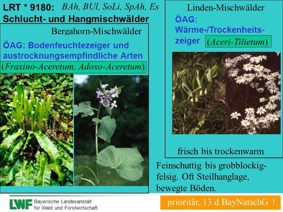 Bayerische Landesanstalt für Wald und Forstwirtschaft LRT * 9180: Schlucht- und Hangmischwälder Feinschuttig bis grobblockig- felsig. Oft Steilhanglag