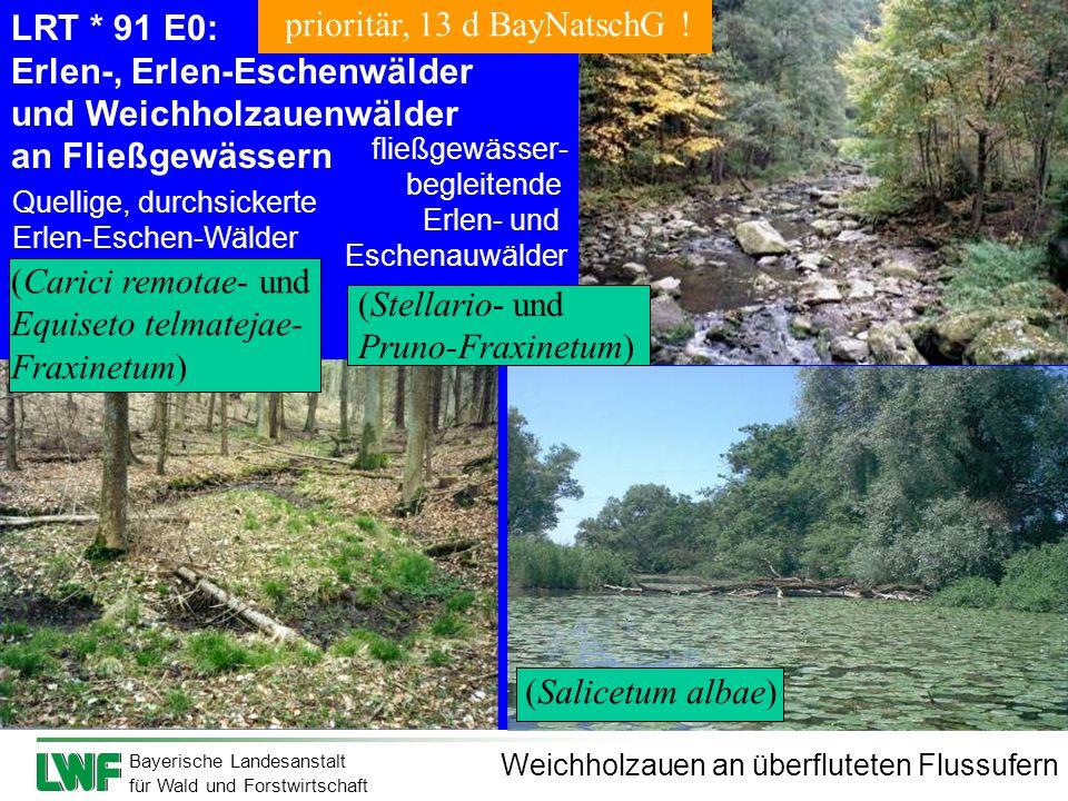 Bayerische Landesanstalt für Wald und Forstwirtschaft LRT * 91 E0: Erlen-, Erlen-Eschenwälder und Weichholzauenwälder an Fließgewässern Quellige, durc