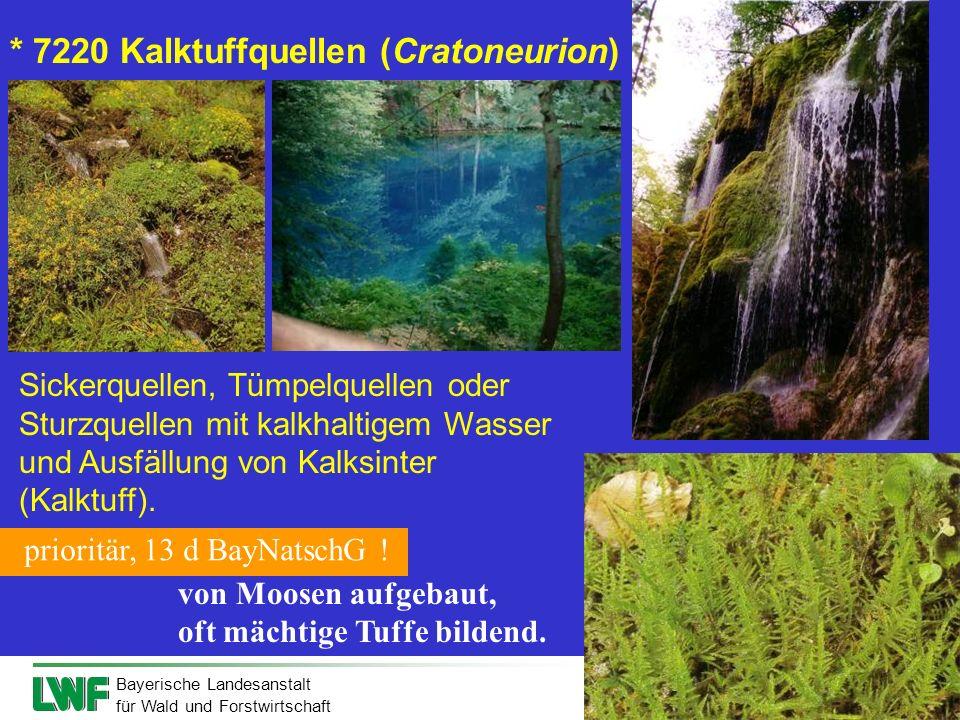 Bayerische Landesanstalt für Wald und Forstwirtschaft Sickerquellen, Tümpelquellen oder Sturzquellen mit kalkhaltigem Wasser und Ausfällung von Kalksi